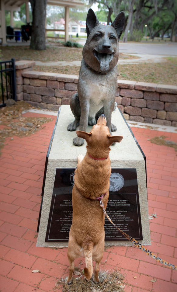 Dogs with War Dog statue