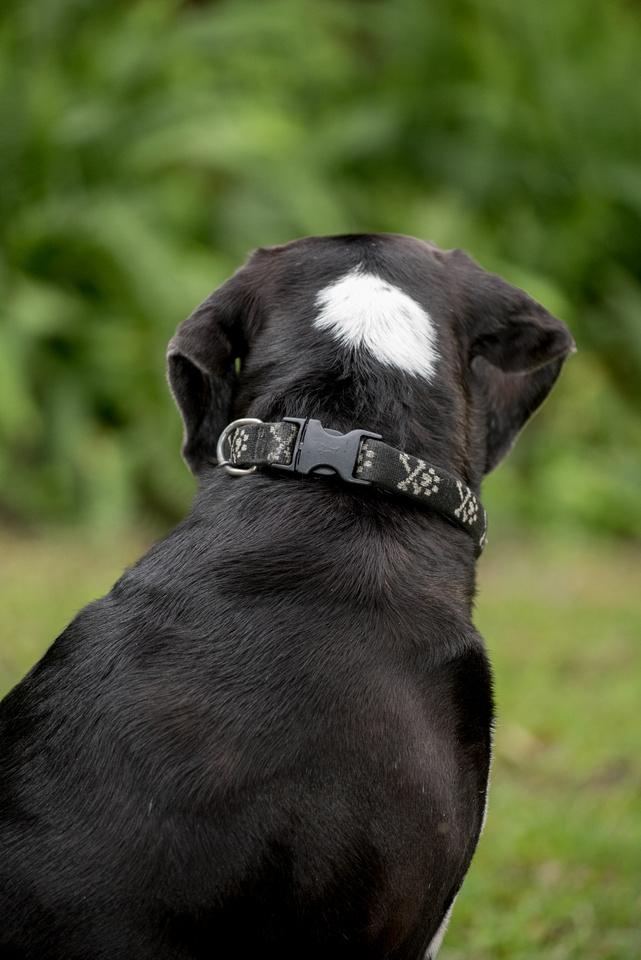 White spot on black dog head