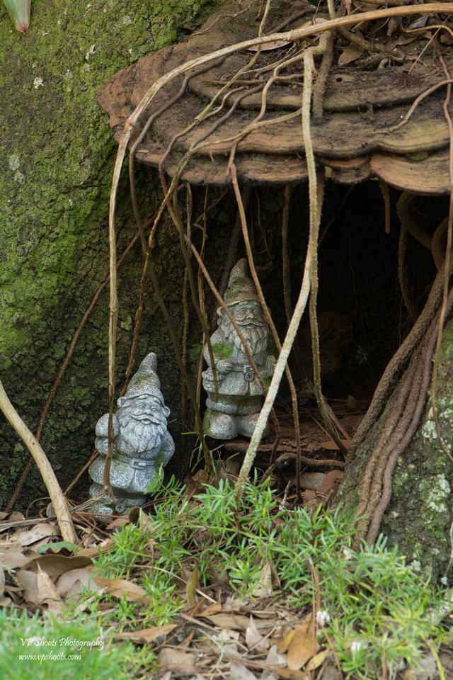Eureka Springs Park - gnomes