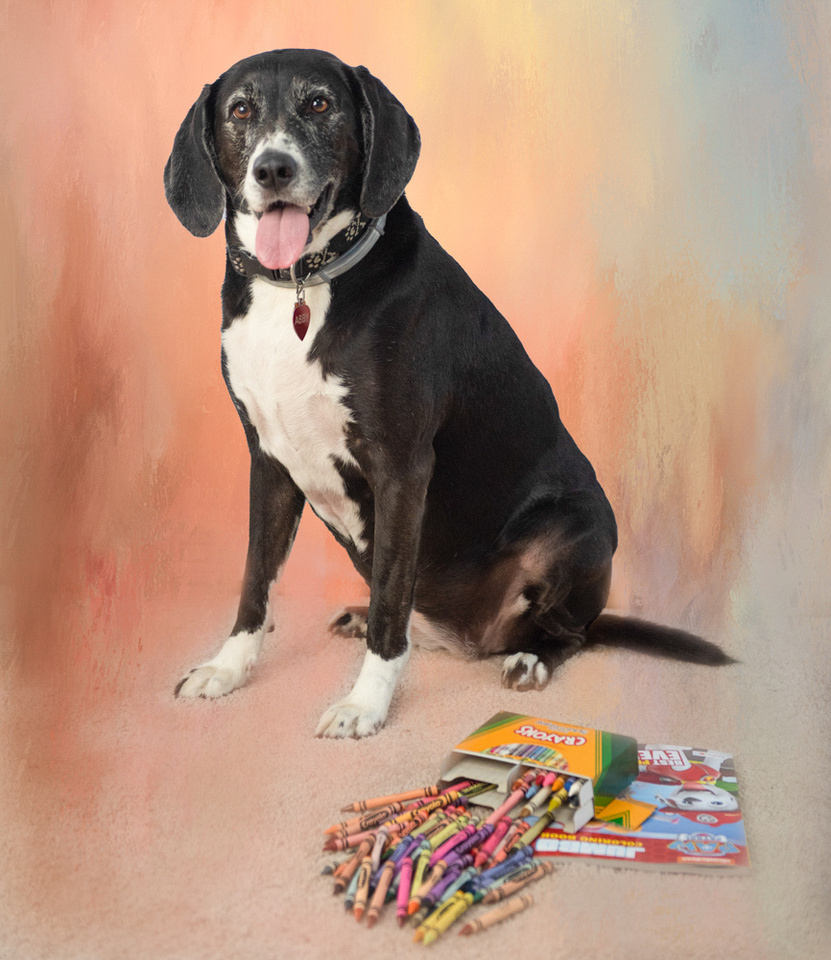 Color surrounding dog in portrait