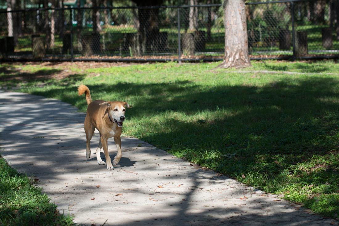 Dog running free on sidewalk