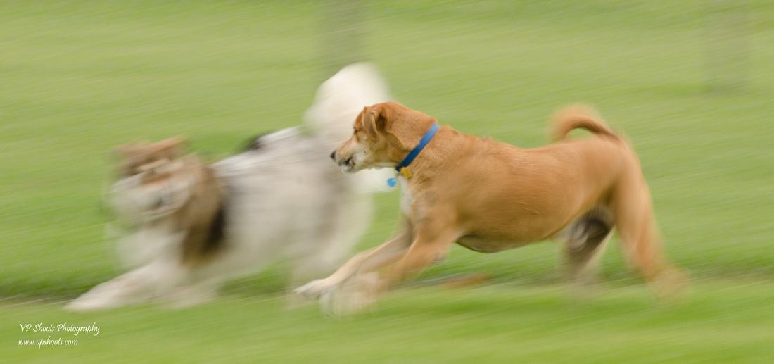 Panning Dog Photography