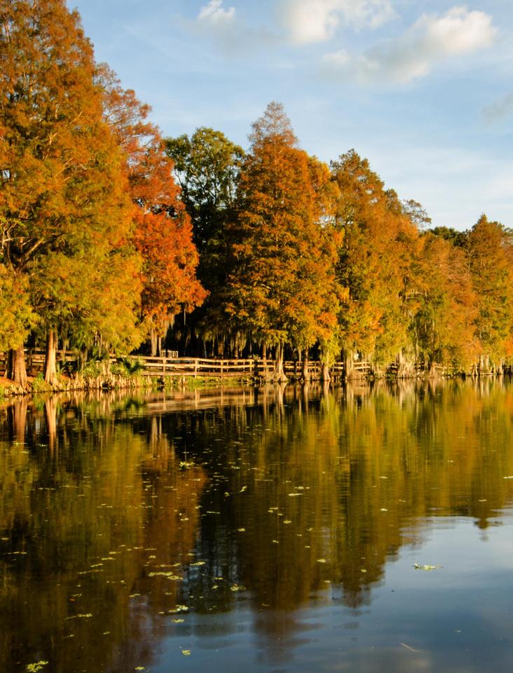 Fall color at Riverhills Park