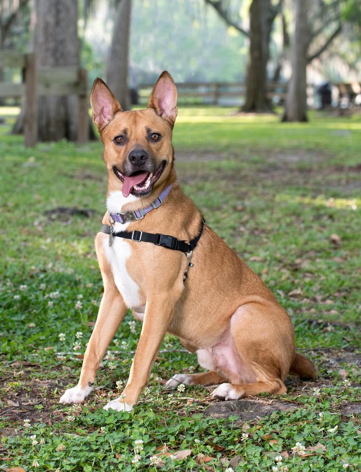 Full body dog portrait at Riverhills Park