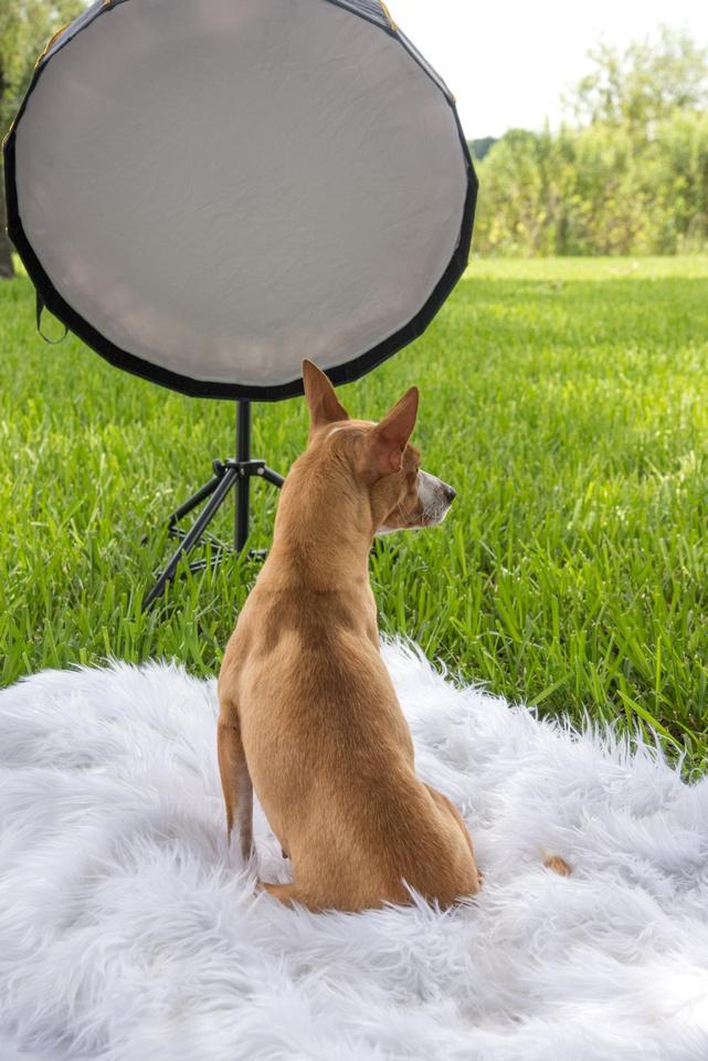 Dog facing away from camera