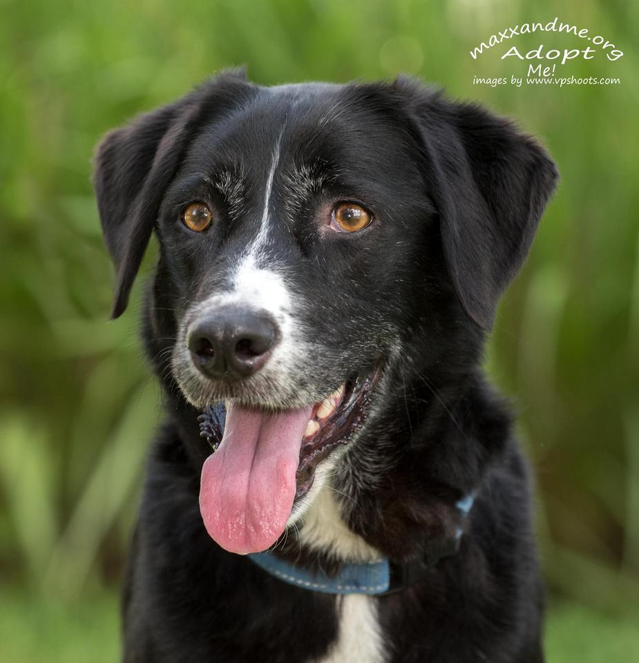 Black dog face portrait