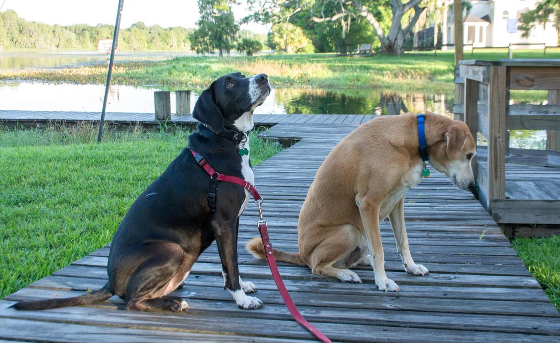 Dog friendly Riverhills Park
