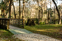 Crystal Springs Preserve Boardwalk