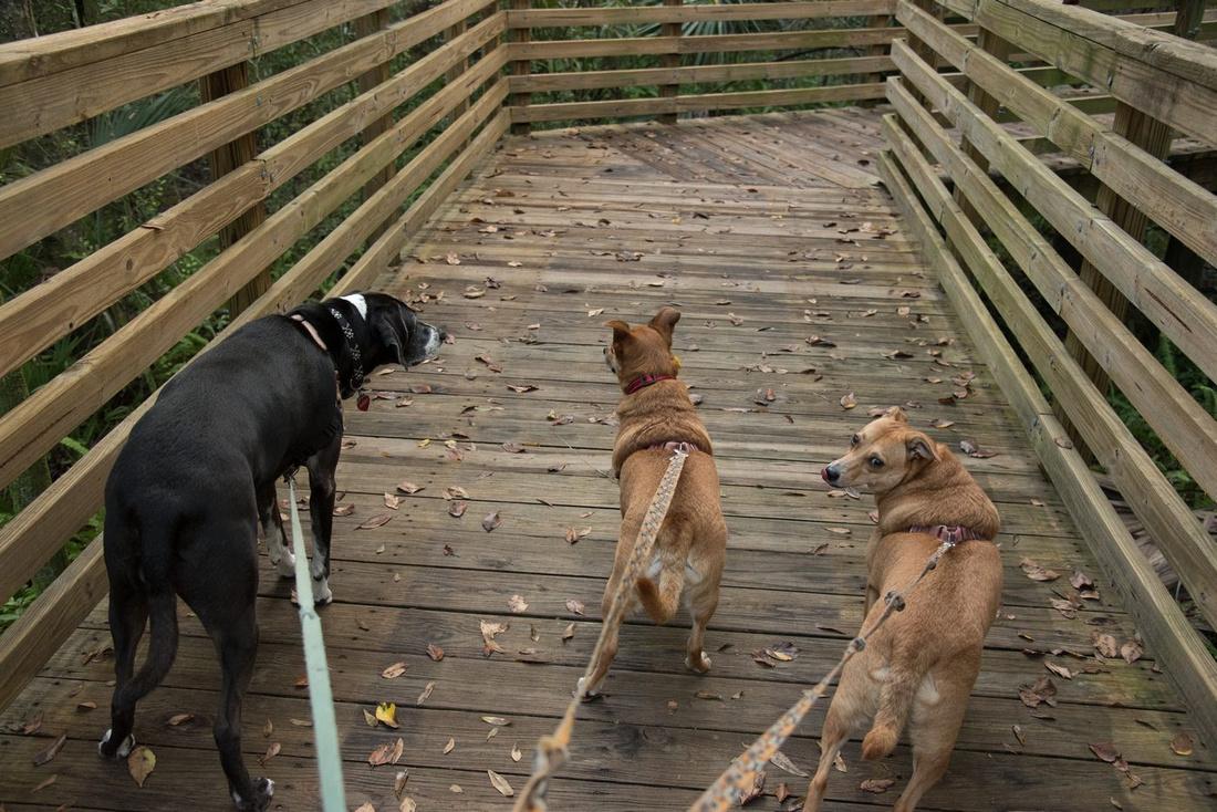 Eureka Springs Park walkway