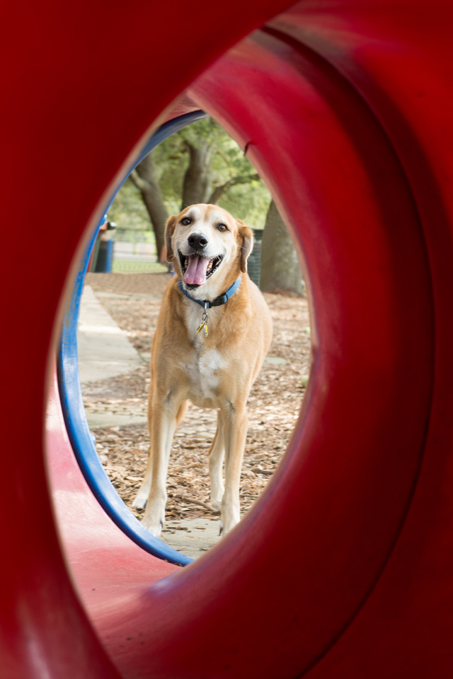 Dog framed by red circular play tube