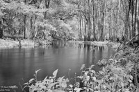 Infrared Hillsborough River