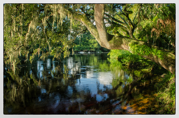Grand Oaks along Hillsborough River