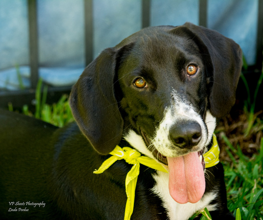 Abby - Adopted by us!