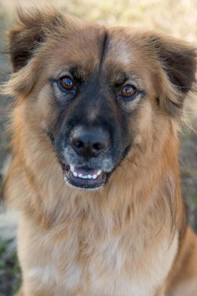 Maxx - Adopted