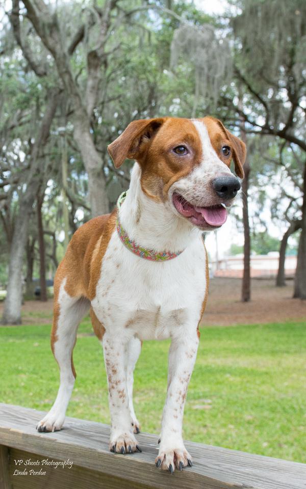 Jasper - male- adopted