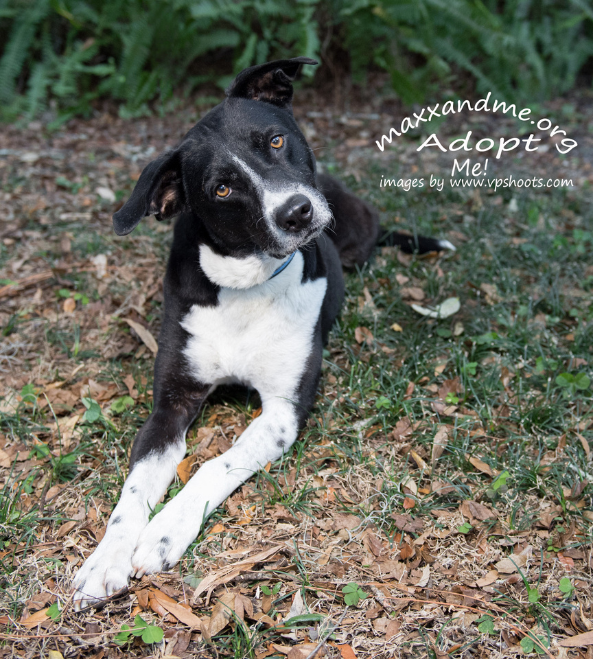 Amore - male adopted