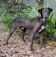 Rucker - male - adopted